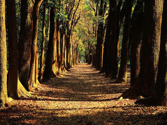 034-新威森林公園-康村財-共用版權(觀光局)